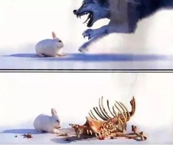 兔子是怎样吃掉狼的?神一般的商业机密!
